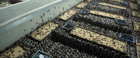 Ferme à insectes pour nourrir les animaux d'élevage
