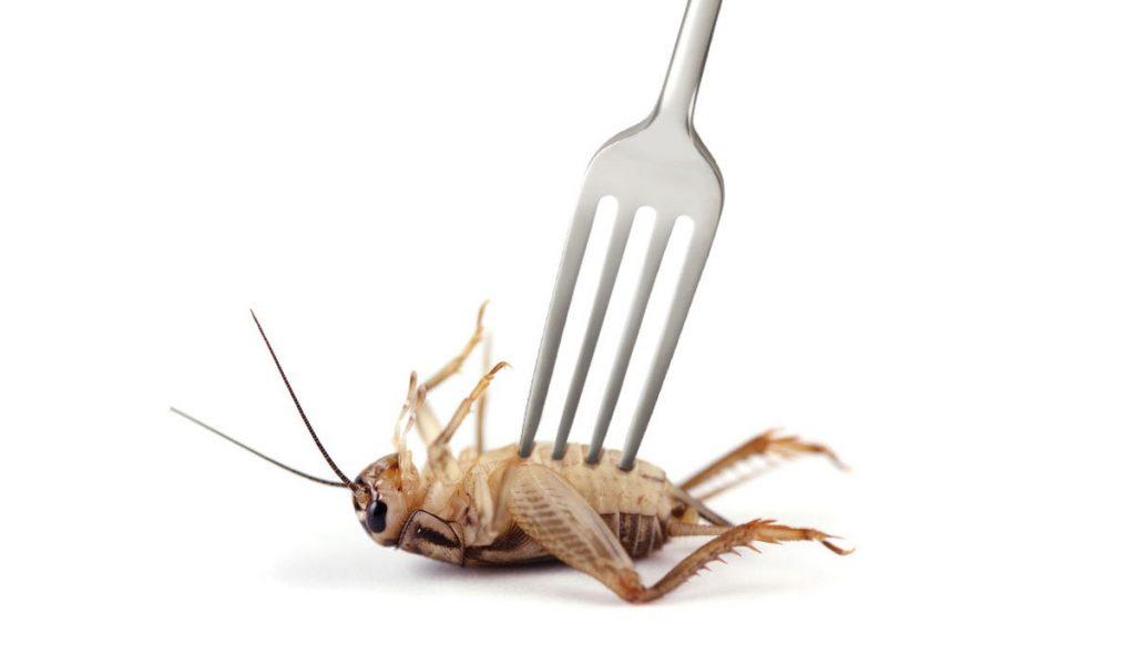 manger des insectes bio c'est bon pour vous et pour la planète